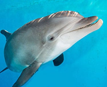 nicholas the dolphin