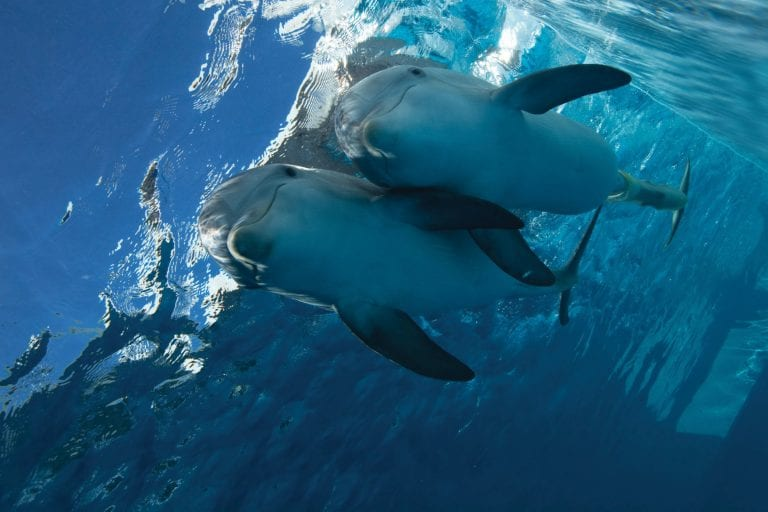 winter and hope dolphins together