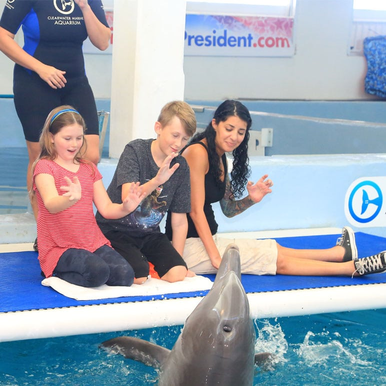Inspirational kids meeting dolphin