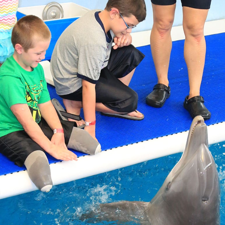 Inspirational boys meeting dolphin