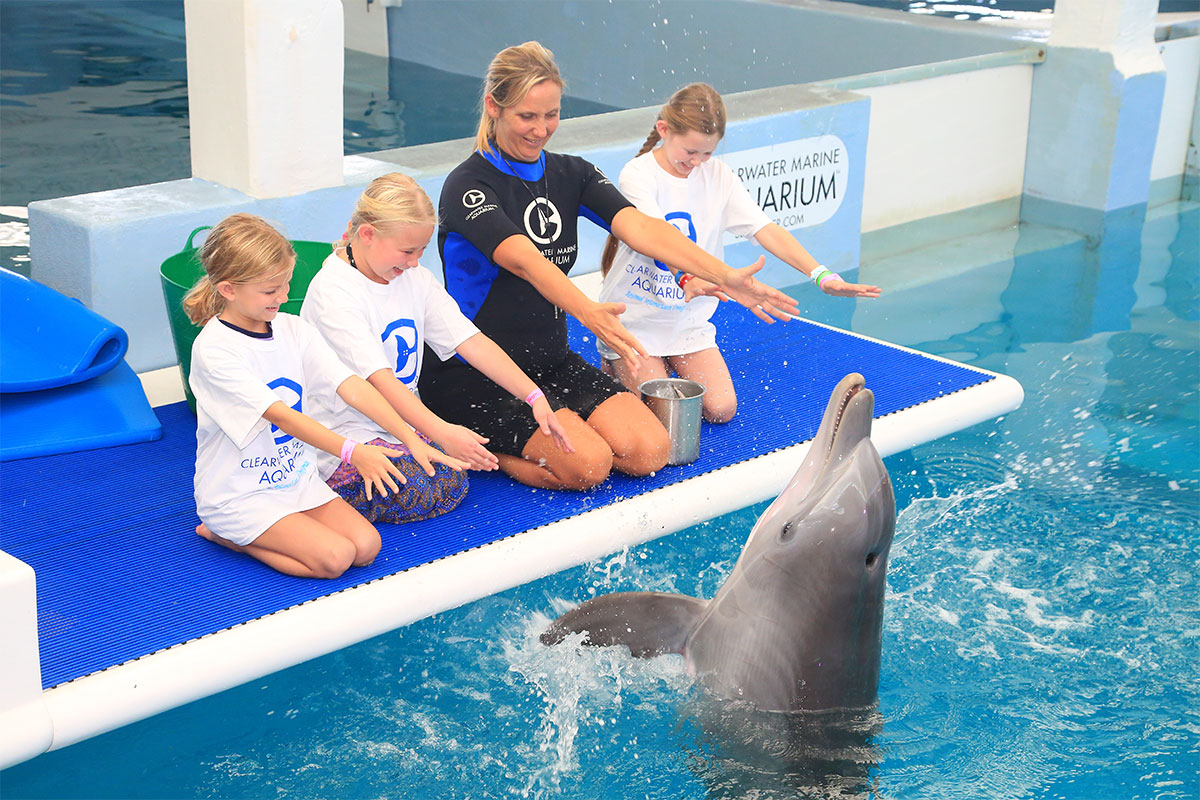 Tickets, Tours and Programs | Clearwater Marine Aquarium