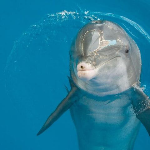 Panama the Dolphin