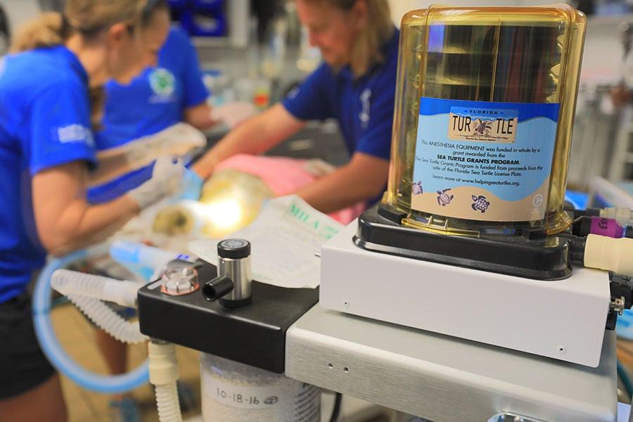 sea turtle hospital medical equipment