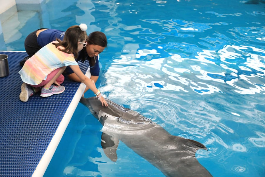 Blind girl meets dolphins