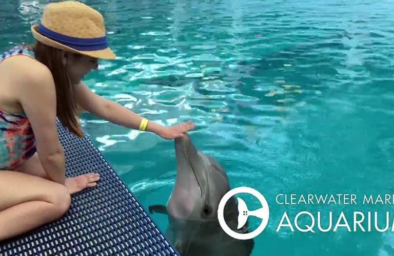 Maddi meets dolphins