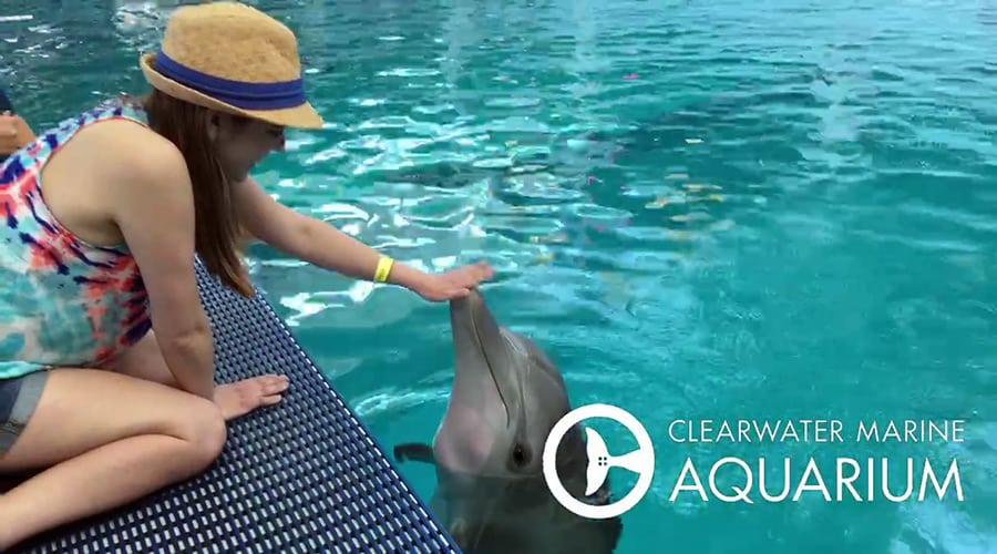 Maddi meets dolphins