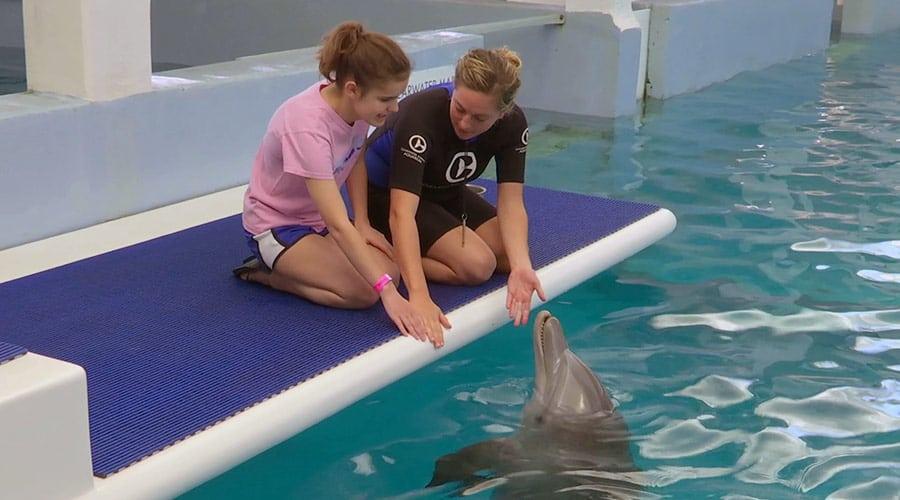 Meghan meeting dolphin