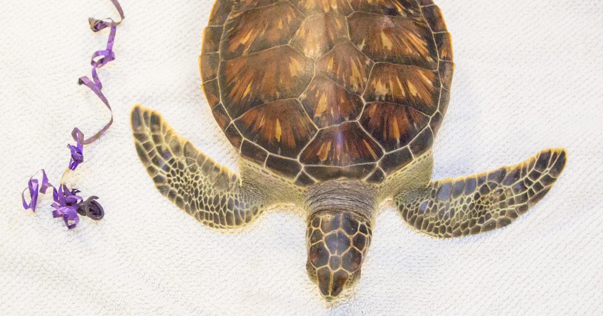 chex sea turtle balloon closeup