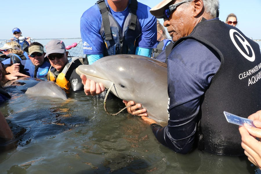 entangled dolphin rescue
