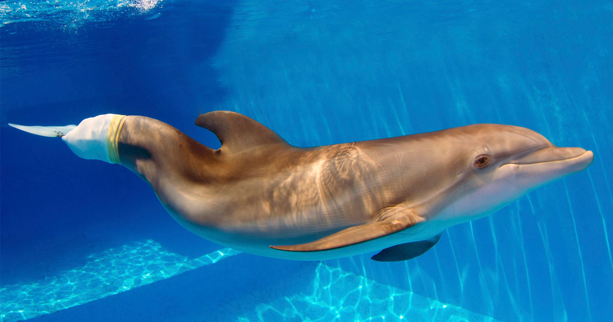 Clearwater Marine Aquarium | Florida's Marine Life Rescue Center