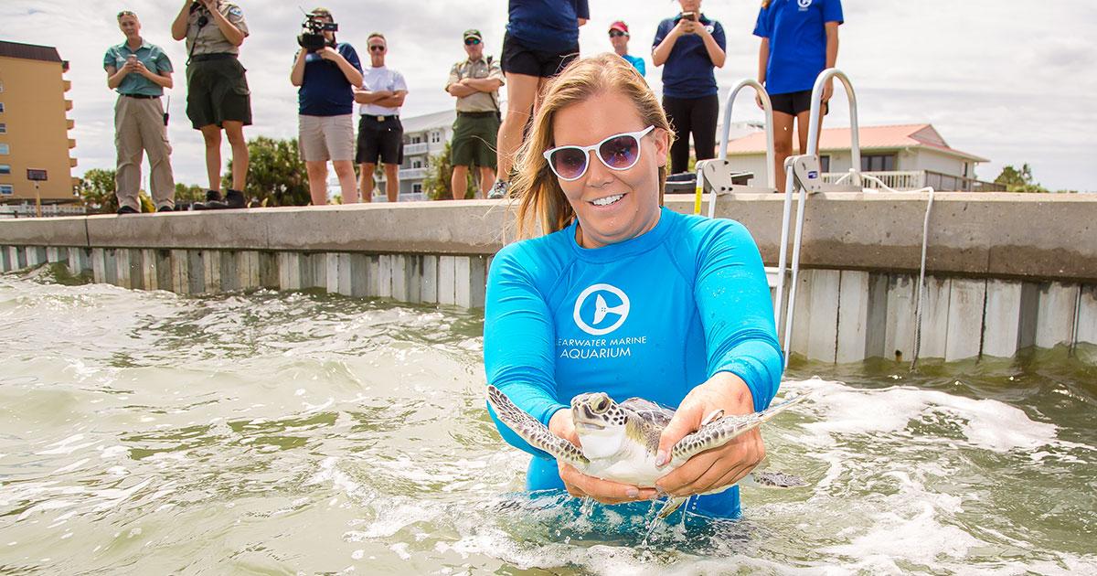 Chex green sea turtle release