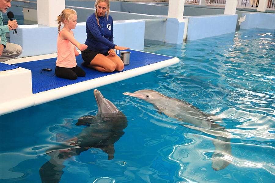 Quad amputee girl meeting Winter and Hope dolphins
