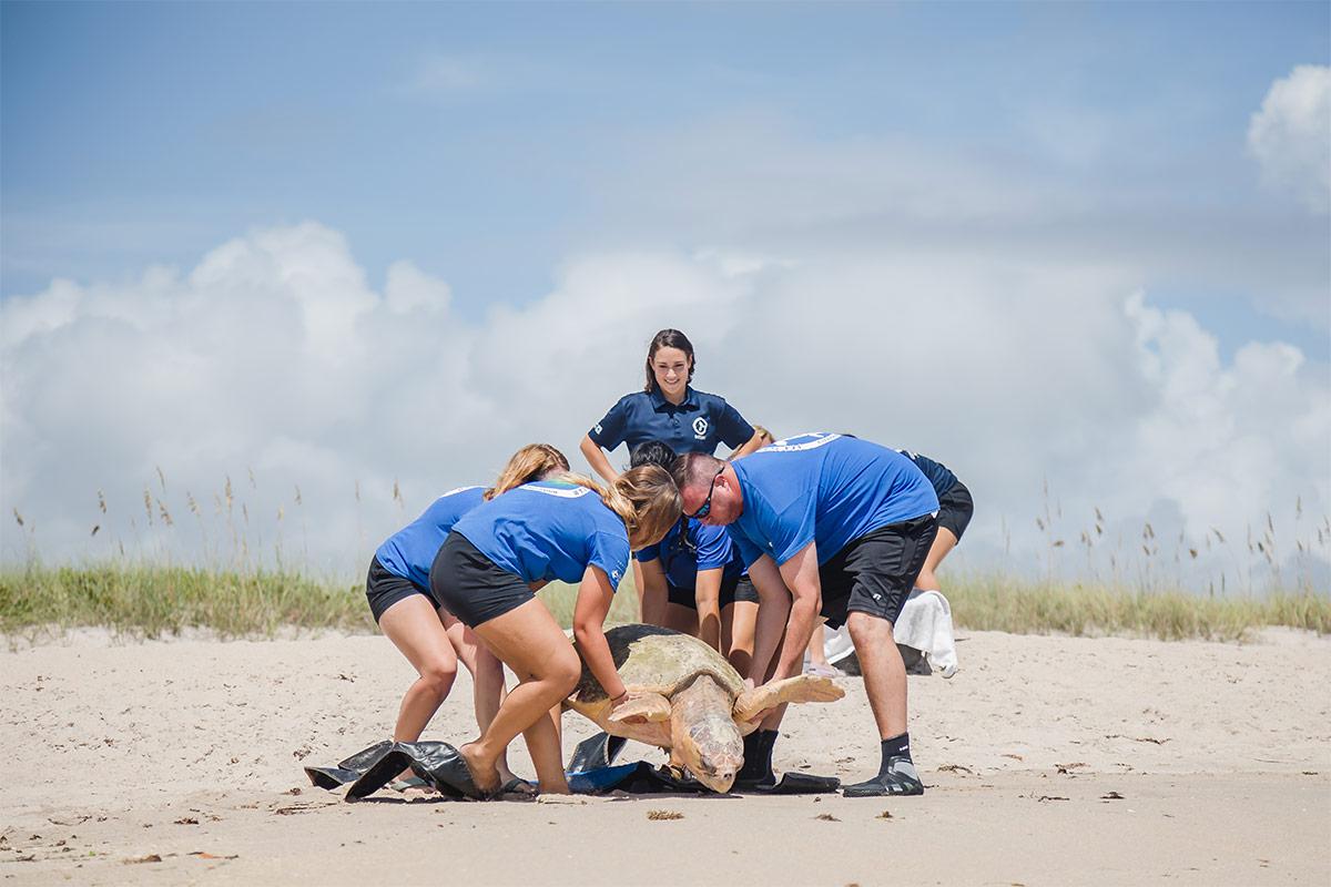 Golden Graham sea turtle team