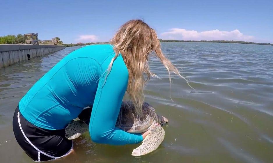 gryffindor sea turtle release