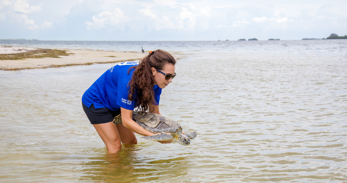 Quaker sea turtle release