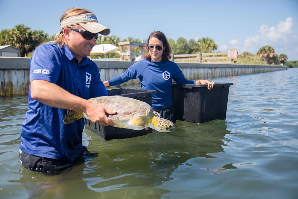 Urkel-O's sea turtle release