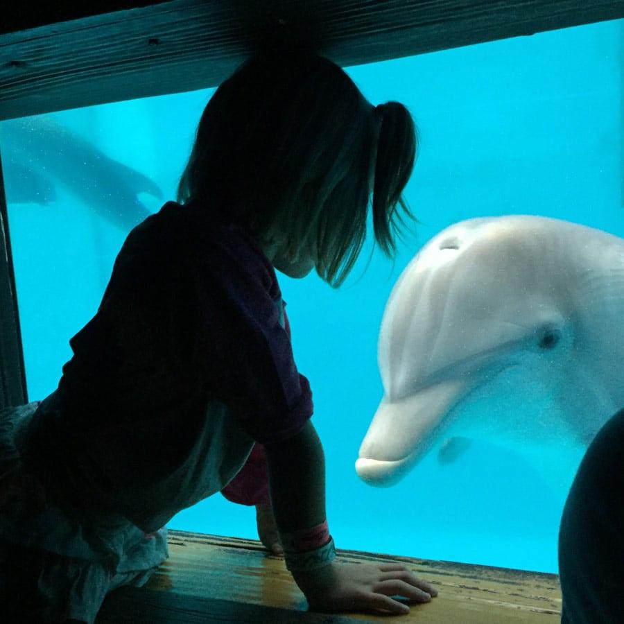 Meeting dolphin in underwater viewing.