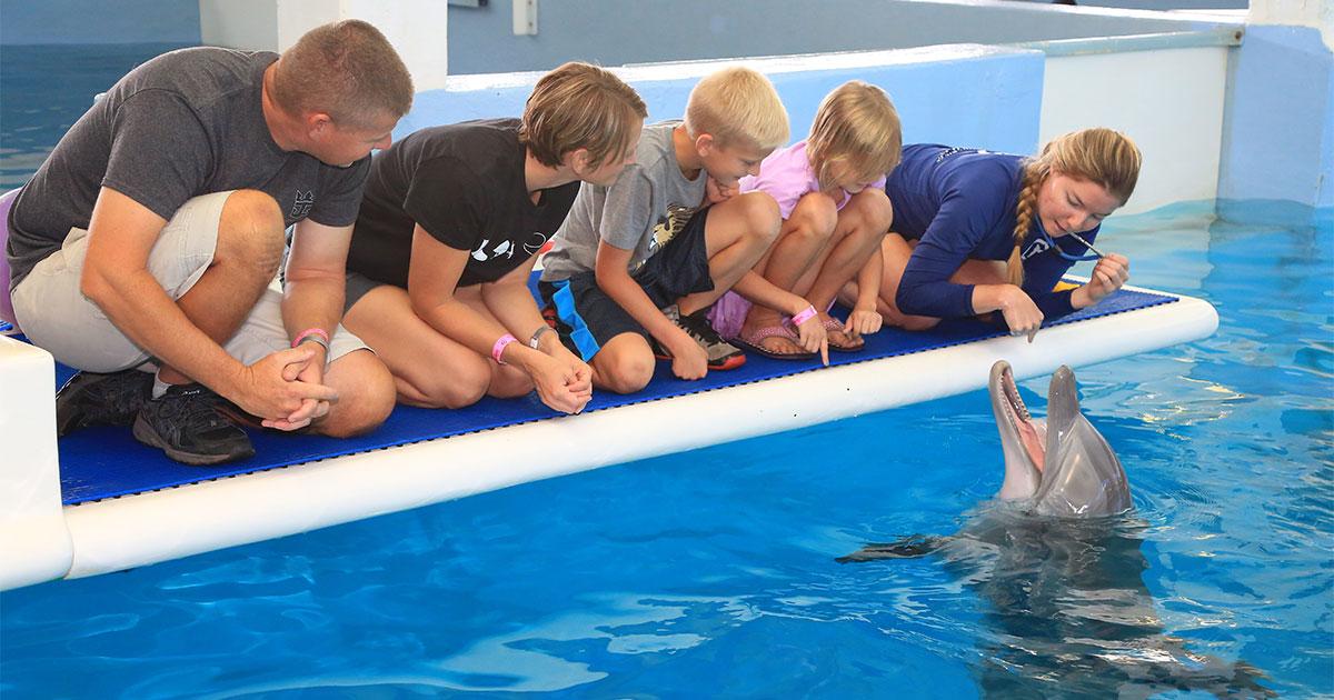 family at dolphin platform
