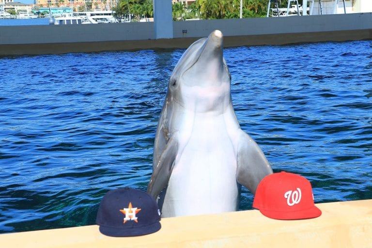 Nick the dolphin makes World Series pick