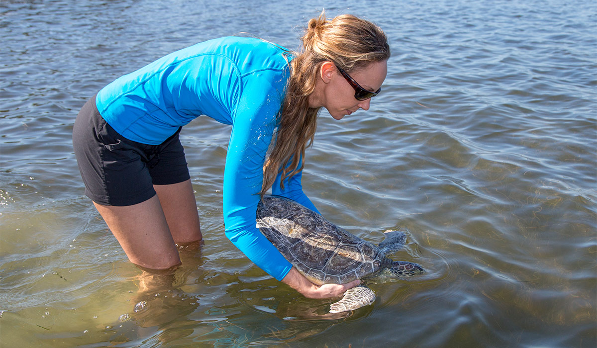 Vanilla Wafer Sea Turtle Release