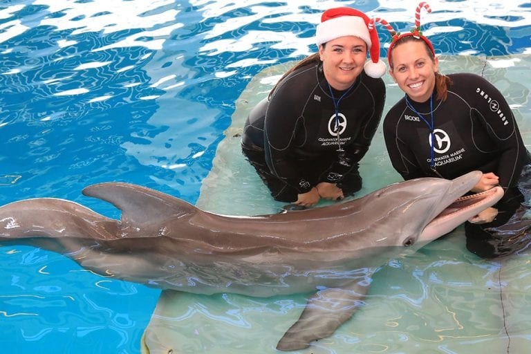 animal care specialists with winter for christmas