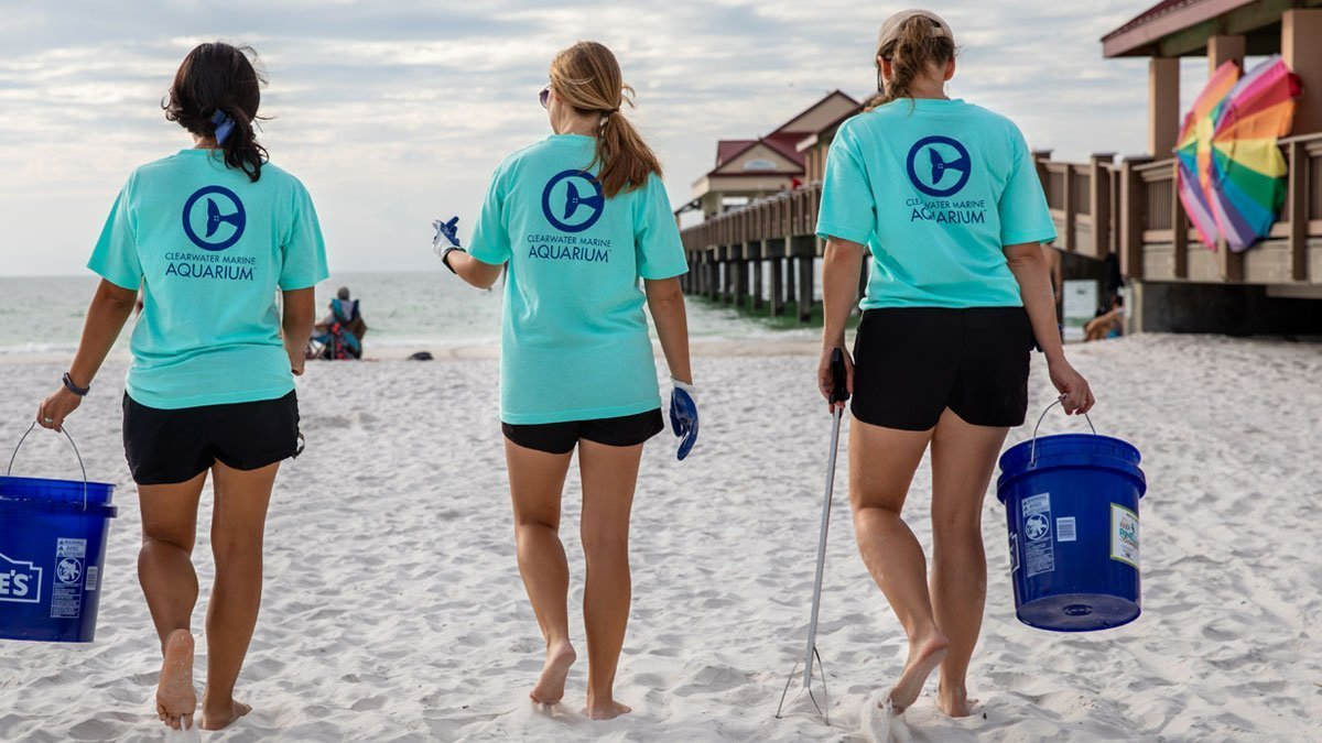 Ocean Allies Clearwater Beach Cleanup