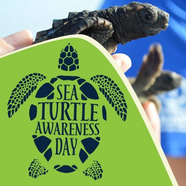 sea turtle awareness day