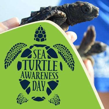sea turtle awareness day