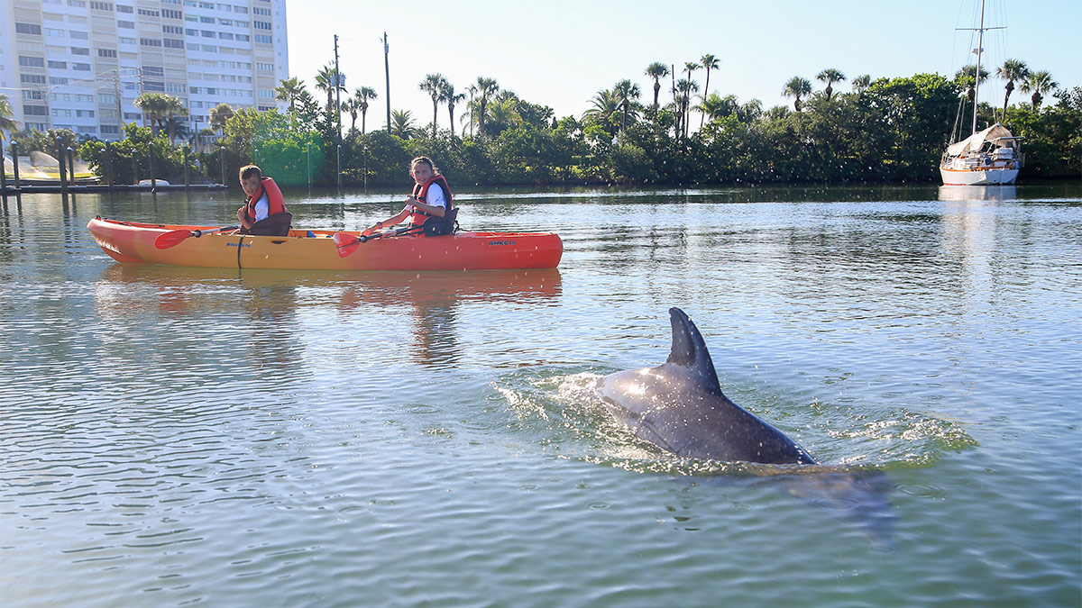 dolphin swimming by camp kayak