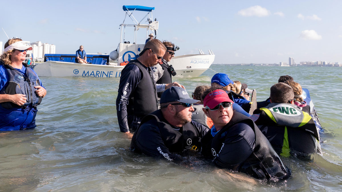 rescue teams disentangling dolphin