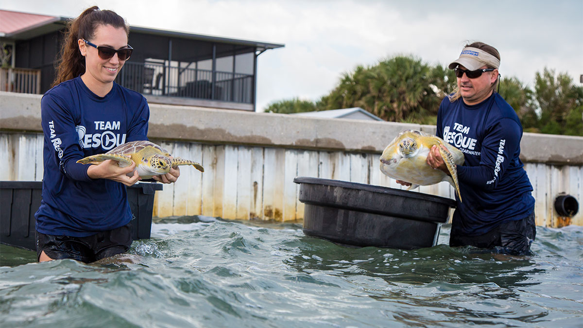 two sea turtles released