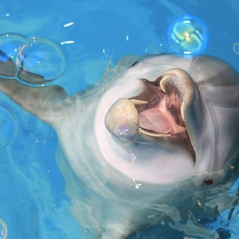 dolphin bubbles