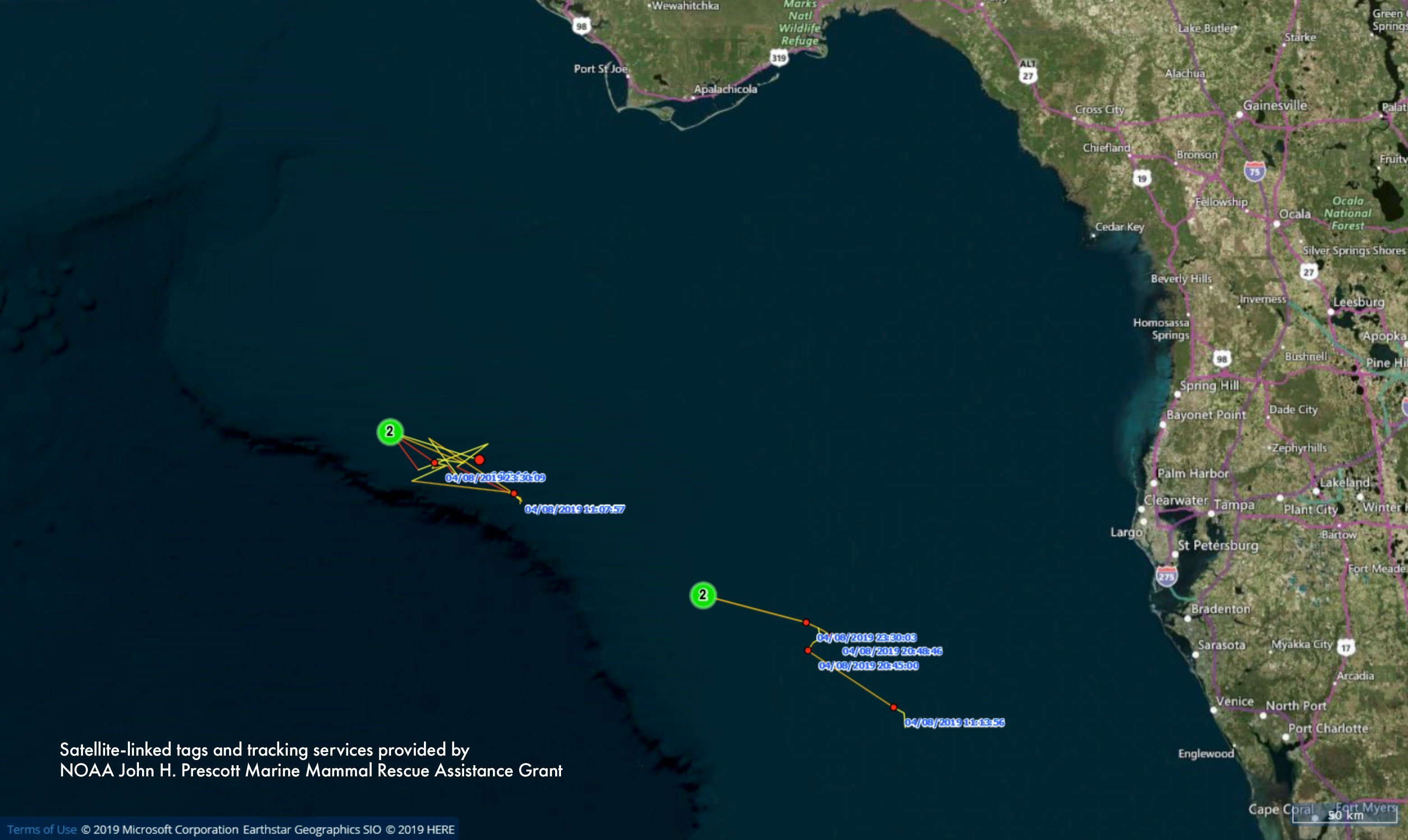 Pilot whale tracking update