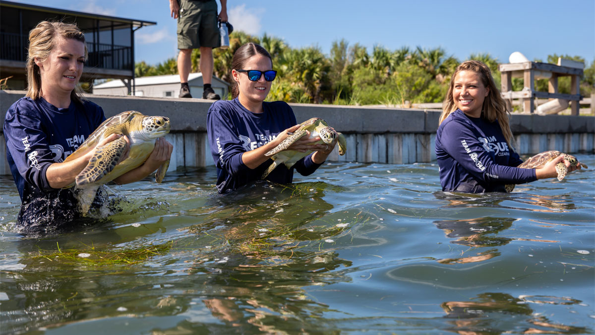 triple sea turtle release