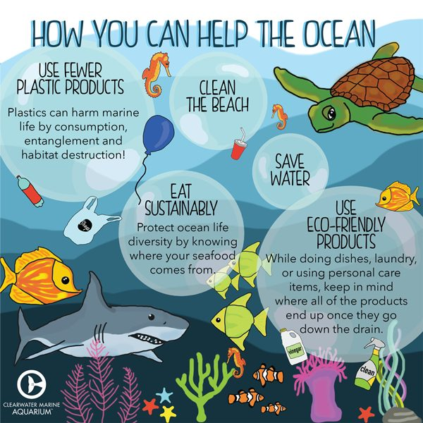 how you can help the ocean infographic