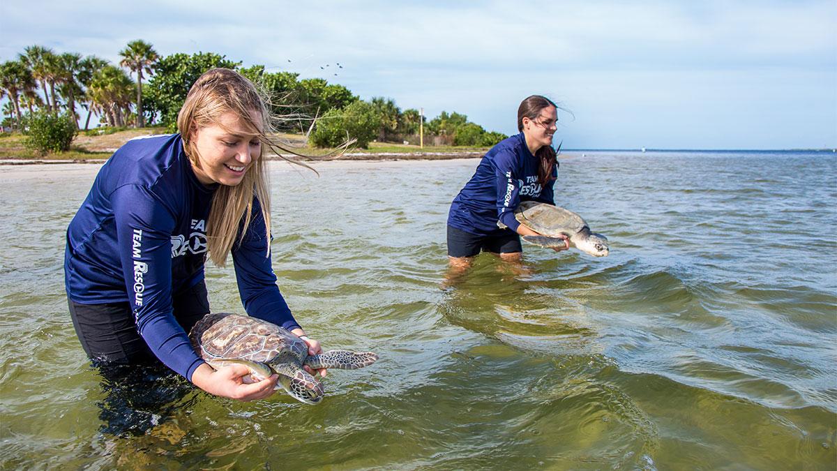 sea turtle release valkyrie and ninja