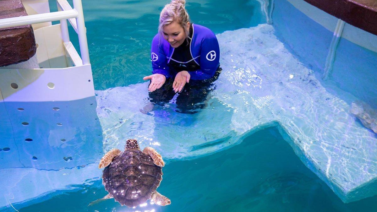 snorkel, loggerhead sea turtle with care team