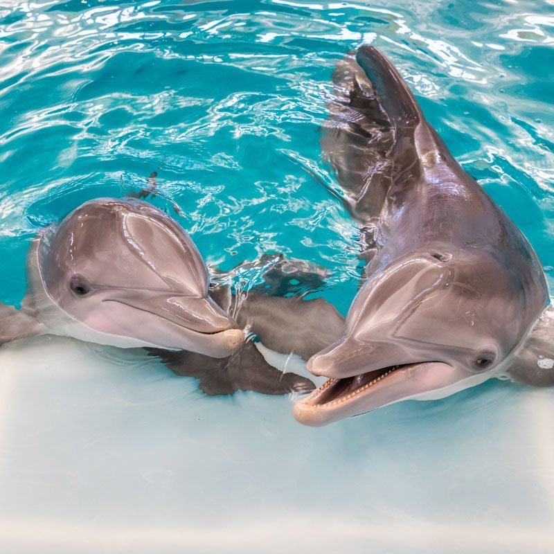 winter and hope, dolphins