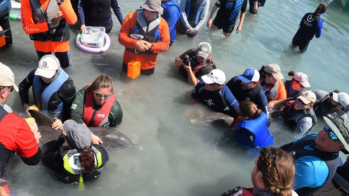 Dolphin rescuers