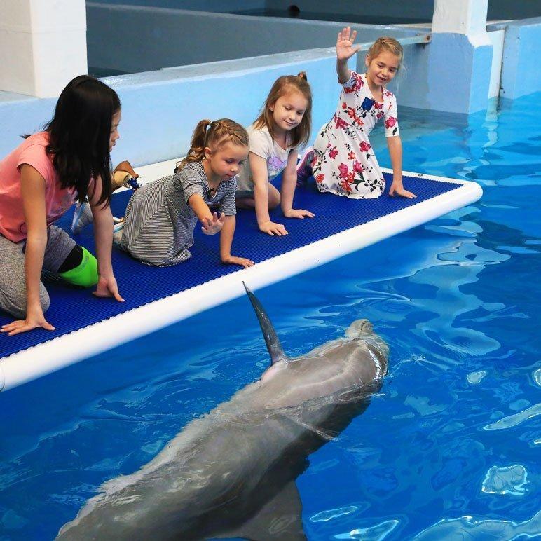 Camp No Limits group of girls waving at dolphin
