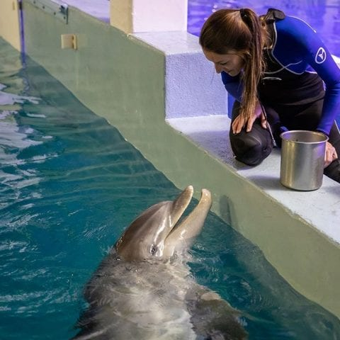 PJ, a bottlenose dolphin