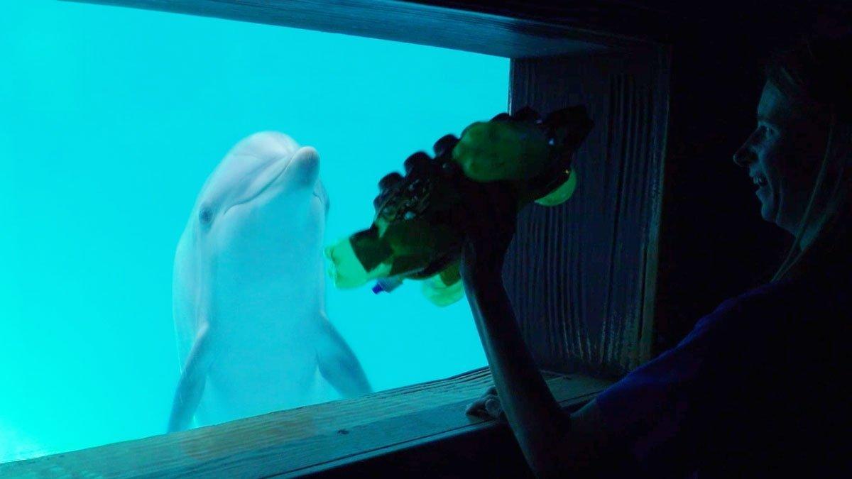 dolphin interaction underwater