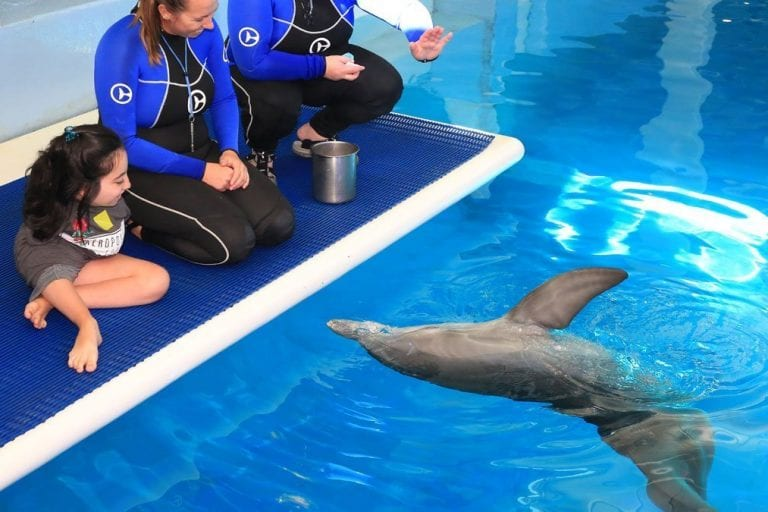 Luciana meeting dolphins on platform