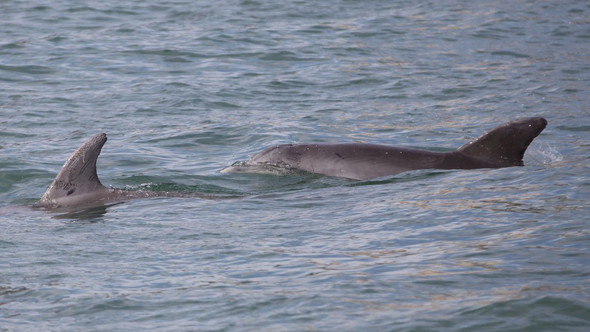 dolphins, stripe and bindy
