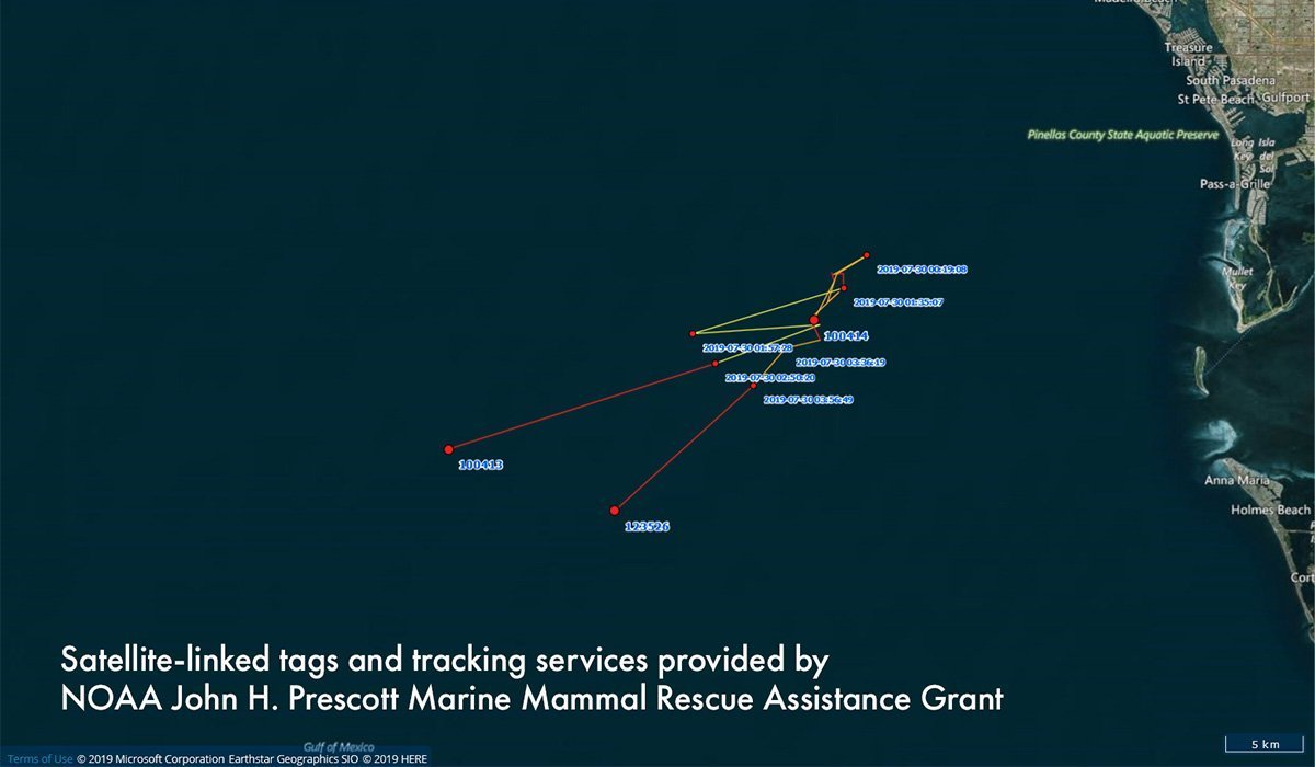 Pilot whale tracking map
