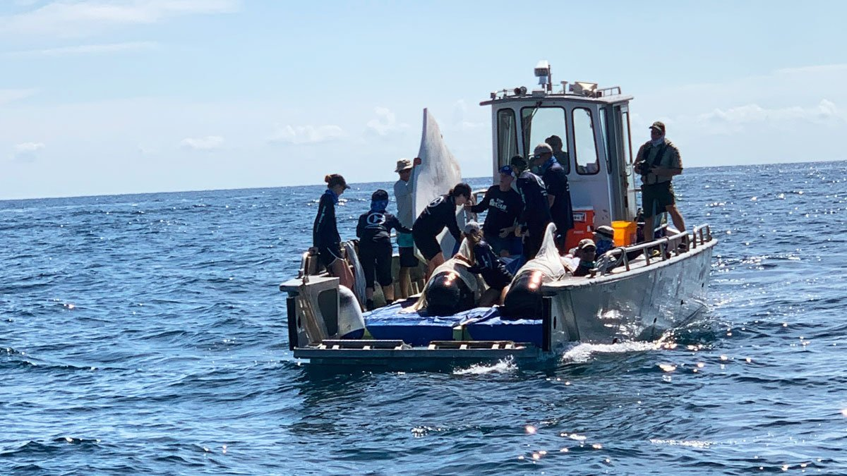 pilot whale release boat