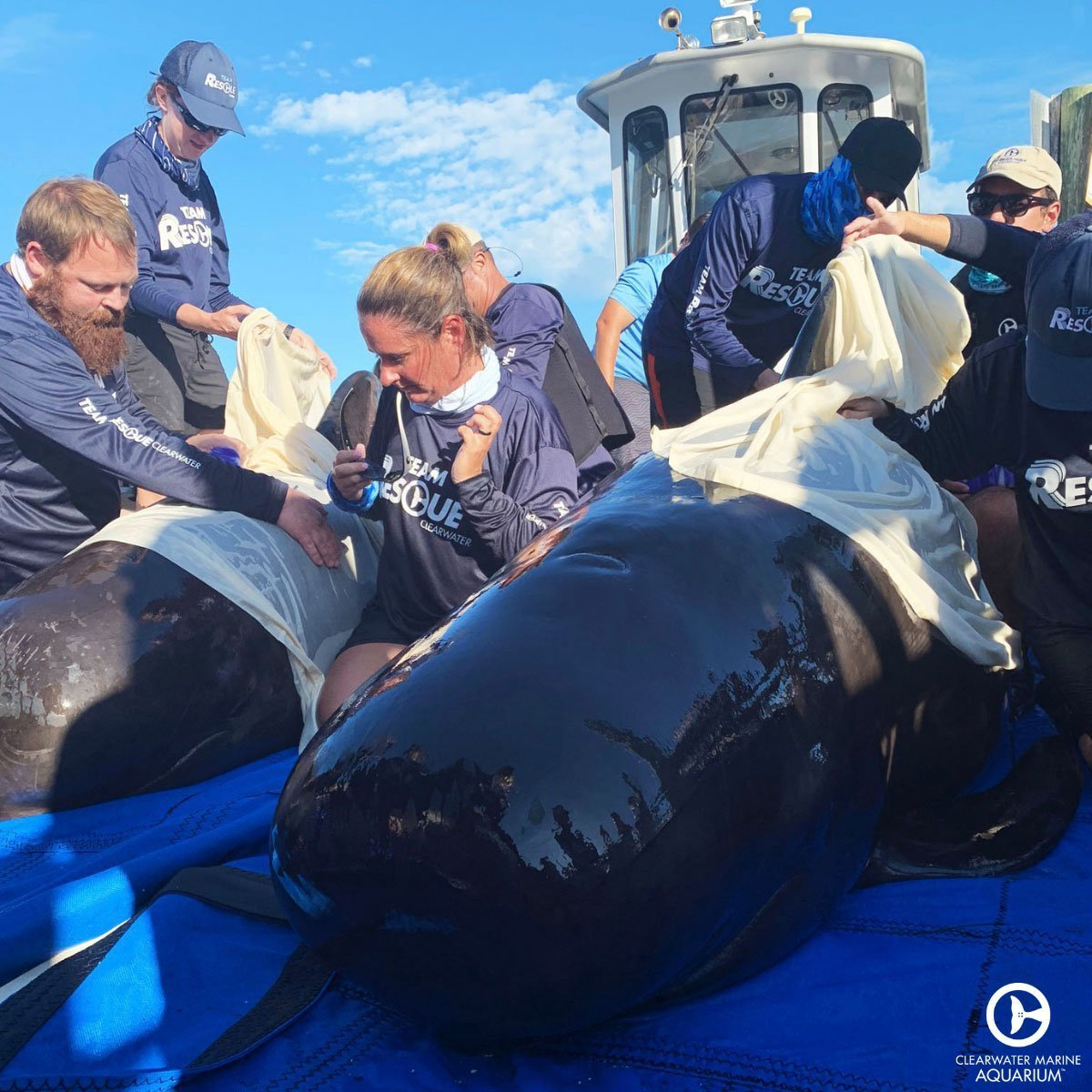 pilot whale release team