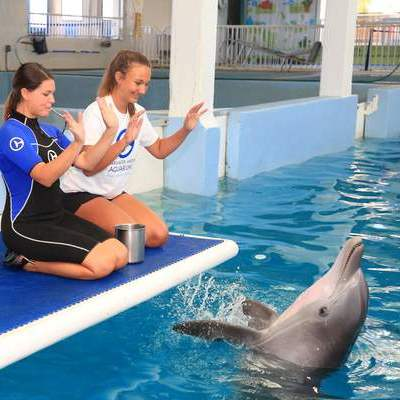 animal care experience on dolphin platform