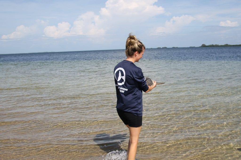 Flip, sea turtle release
