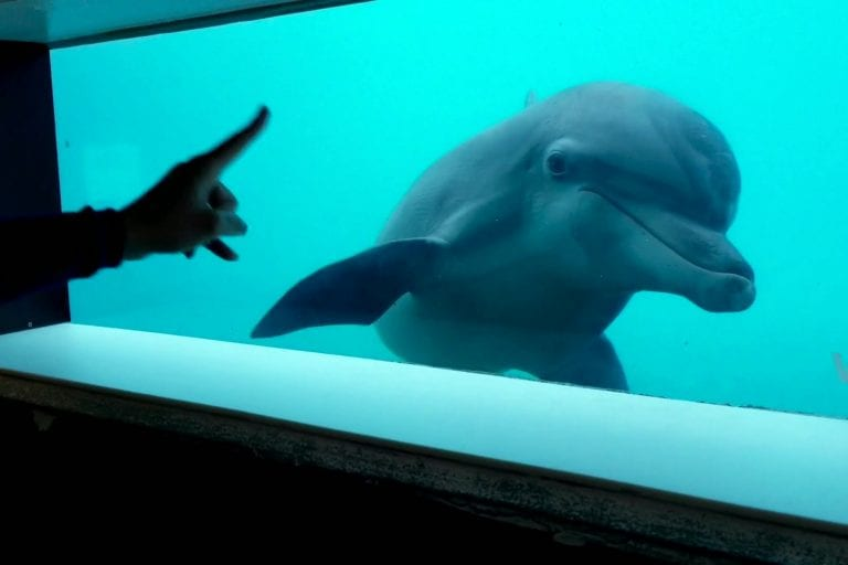 Nicholas the dolphin at underwater window